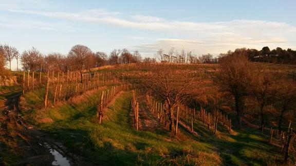 pinot noir vineyards italy franciacorta