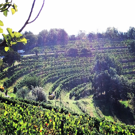 franciacorta harvest 2015